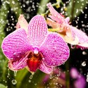 watering_the_orchid_by_3nslav3-d31cgaf